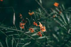 Κόκκινο λουλούδι και τροπικό πράσινο φύλλο στο σκοτεινό τόνο στοκ φωτογραφία