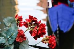 Κόκκινο λουλούδι στη Βενετία Στοκ Φωτογραφίες