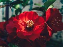 Κόκκινο λουλούδι στο ηλιοβασίλεμα Στοκ φωτογραφίες με δικαίωμα ελεύθερης χρήσης