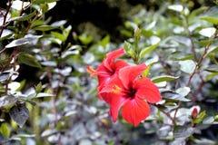 Κόκκινο λουλούδι στο πάρκο της φυτείας μπαμπού Anduze Στοκ Εικόνα