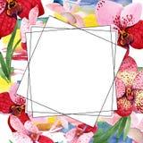 Κόκκινο λουλούδι της Vanda ορχιδεών Floral βοτανικό λουλούδι Τετράγωνο διακοσμήσεων συνόρων πλαισίων Στοκ φωτογραφία με δικαίωμα ελεύθερης χρήσης
