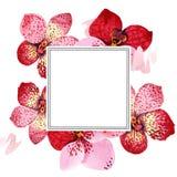 Κόκκινο λουλούδι της Vanda ορχιδεών Floral βοτανικό λουλούδι Τετράγωνο διακοσμήσεων συνόρων πλαισίων Στοκ Εικόνες