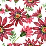 Κόκκινο λουλούδι gazania Floral βοτανικό λουλούδι Άνευ ραφής πρότυπο ανασκόπησης Στοκ εικόνες με δικαίωμα ελεύθερης χρήσης