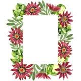 Κόκκινο λουλούδι gazania Floral βοτανικό λουλούδι Τετράγωνο διακοσμήσεων συνόρων πλαισίων Στοκ φωτογραφία με δικαίωμα ελεύθερης χρήσης
