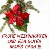 Κόκκινο λουλούδι Poinsettia με το δέντρο έλατου και χιόνι στο άσπρο υπόβαθρο Κάρτα Χριστουγέννων χαιρετισμών κάρτα christmastime  στοκ φωτογραφίες