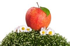 Κόκκινο μήλο στην πράσινη χλόη Στοκ εικόνες με δικαίωμα ελεύθερης χρήσης