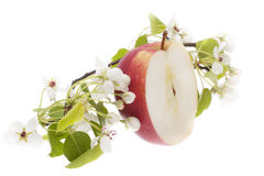 Κόκκινο μήλο - που κόβεται σε δύο Στοκ Φωτογραφίες