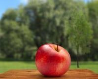 Κόκκινο μήλο στο υπόβαθρο ουρανού και δέντρων Στοκ εικόνα με δικαίωμα ελεύθερης χρήσης