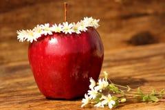 Κόκκινο μήλο Στοκ Φωτογραφίες