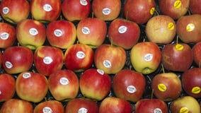 Κόκκινο μήλο Elstar Στοκ Φωτογραφίες
