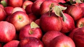 κόκκινο μήλων στοκ φωτογραφία