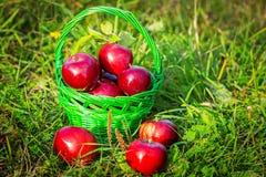 κόκκινο μαχαιριών υφασμάτων καλαθιών μήλων έπειτα σε δύο Στοκ εικόνες με δικαίωμα ελεύθερης χρήσης