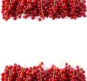 κόκκινο μούρων Τοπ όψη Κόκκινες σταφίδες στα σύνορα της εικόνας με το διάστημα αντιγράφων για το κείμενο Ώριμες κόκκινες σταφίδες Στοκ Εικόνα
