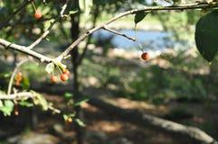 κόκκινο μούρων Στοκ φωτογραφία με δικαίωμα ελεύθερης χρήσης