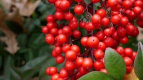 κόκκινο μούρων Στοκ εικόνα με δικαίωμα ελεύθερης χρήσης