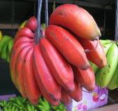 κόκκινο μπανανών Στοκ Εικόνες