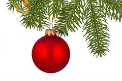 Κόκκινο μπιχλιμπίδι Χριστουγέννων στον κλάδο χριστουγεννιάτικων δέντρων Στοκ εικόνα με δικαίωμα ελεύθερης χρήσης