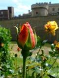 κόκκινο μπουμπούκι τριαντάφυλλου Στοκ εικόνα με δικαίωμα ελεύθερης χρήσης