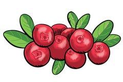 Κόκκινο μύρτιλλο Στοκ Φωτογραφία