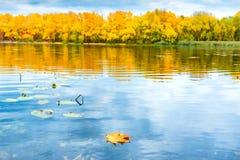 Κόκκινο ξηρό φύλλο στο νερό Στοκ φωτογραφίες με δικαίωμα ελεύθερης χρήσης