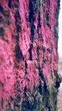 Κόκκινο ξύλινο δέντρο Στοκ φωτογραφία με δικαίωμα ελεύθερης χρήσης