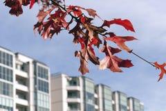 κόκκινο οικοδόμησης κλά&de Στοκ εικόνα με δικαίωμα ελεύθερης χρήσης