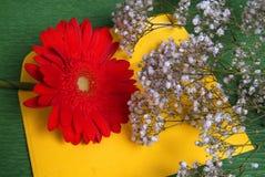 Κόκκινο λουλούδι και με τα λουλούδια Στοκ εικόνες με δικαίωμα ελεύθερης χρήσης