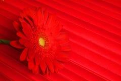 Κόκκινο λουλούδι και με τα λουλούδια Στοκ εικόνα με δικαίωμα ελεύθερης χρήσης