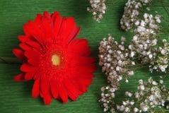 Κόκκινο λουλούδι και με τα λουλούδια Στοκ Εικόνες