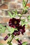 Κόκκινο λουλούδι και πράσινος μίσχος Στοκ Εικόνα