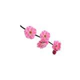 Κόκκινο λουλούδι κερασιών Στοκ Εικόνα