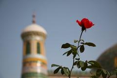 Κόκκινο λουλούδι μπροστά από τον πύργο μουσουλμανικών τεμενών Στοκ Φωτογραφίες