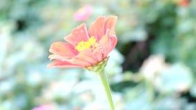 Κόκκινο λουλούδι που κάμπτει στον αέρα Στοκ Εικόνες