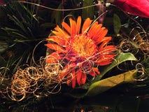 Κόκκινο λουλούδι στα Χριστούγεννα arrangeme Στοκ εικόνα με δικαίωμα ελεύθερης χρήσης