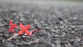 Κόκκινο λουλούδι στο δρόμο Στοκ φωτογραφίες με δικαίωμα ελεύθερης χρήσης