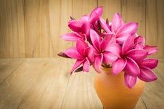 Κόκκινο λουλούδι frangipani (plumaria) Στοκ Φωτογραφίες