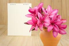 Κόκκινο λουλούδι frangipani (plumaria) Στοκ Εικόνες
