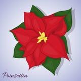 Κόκκινο λουλούδι poinsettia fractal Χριστουγέννων αστέρι νύχτας εικόνας Απλό ύφος κινούμενων σχεδίων επίσης corel σύρετε το διάνυ Στοκ Εικόνες