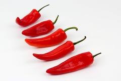 Κόκκινο πέντε - καυτά πιπέρια στο άσπρο υπόβαθρο Στοκ εικόνες με δικαίωμα ελεύθερης χρήσης