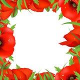 κόκκινο παπαρουνών πλαισίων Στοκ φωτογραφία με δικαίωμα ελεύθερης χρήσης
