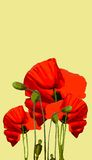 κόκκινο παπαρουνών διανυσματική απεικόνιση