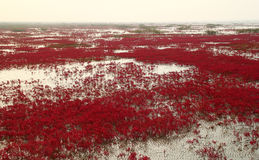 κόκκινο παραλιών Στοκ Φωτογραφία