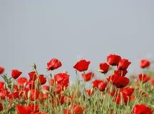κόκκινο πεδίων στοκ φωτογραφία με δικαίωμα ελεύθερης χρήσης