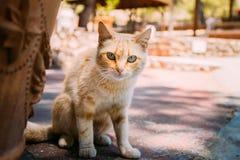 Κόκκινο περιπλανώμενο γατάκι οδών γατών υπαίθριο Στοκ φωτογραφίες με δικαίωμα ελεύθερης χρήσης