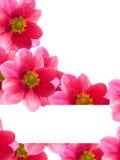 κόκκινο πετάλων λουλο&upsil Στοκ Εικόνες