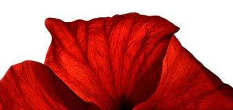 κόκκινο πετάλων Στοκ εικόνα με δικαίωμα ελεύθερης χρήσης