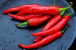 Κόκκινο πιπέρι σε ένα σκοτεινό υπόβαθρο Στοκ Φωτογραφίες