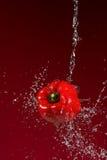 Κόκκινο πιπέρι στο κόκκινο υπόβαθρο Στοκ Φωτογραφίες