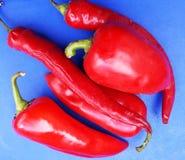 Κόκκινο πιπέρι στο μπλε υπόβαθρο Στοκ Εικόνες