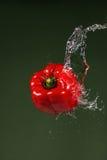 Κόκκινο πιπέρι στο πράσινο υπόβαθρο Στοκ Φωτογραφίες